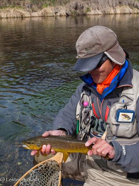 Satoshi Yamamoto, brown trout, spring creek