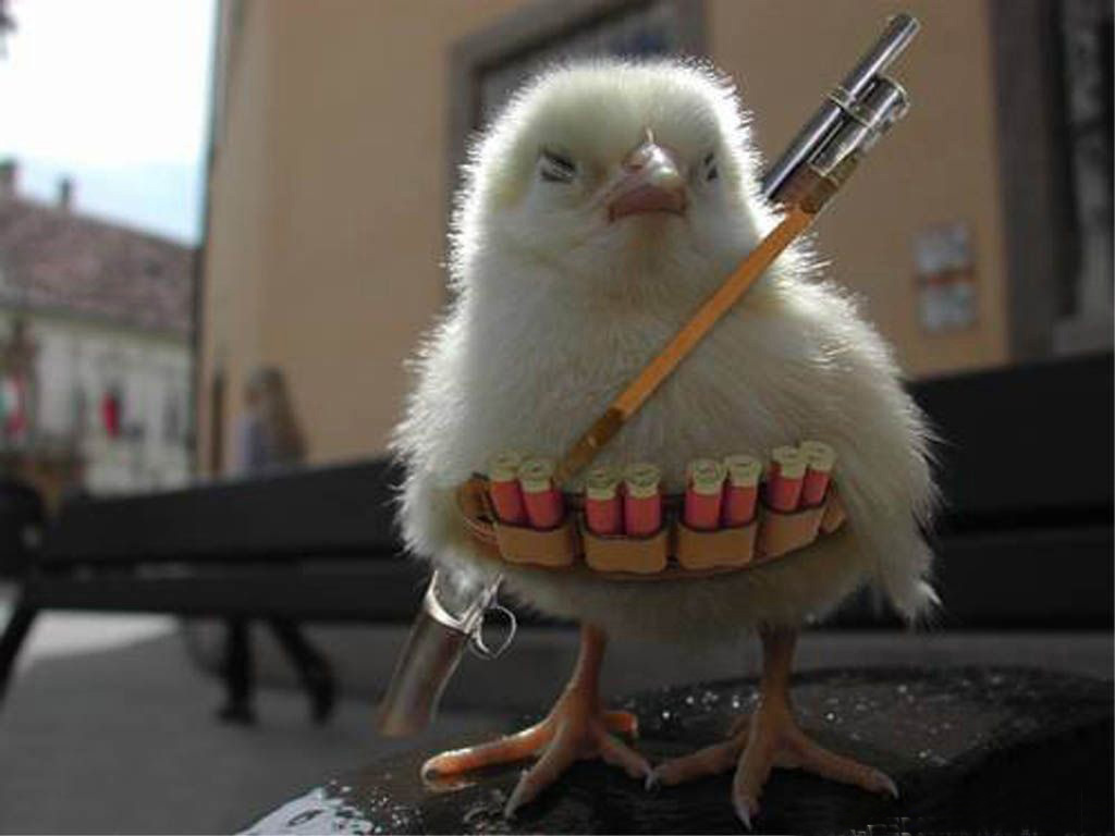 http://3.bp.blogspot.com/-iqX_E_1bBUE/TpaiJa6RCFI/AAAAAAAAAO4/iQsHom51RTo/s1600/funny-wallpapers-chicken-war.jpg