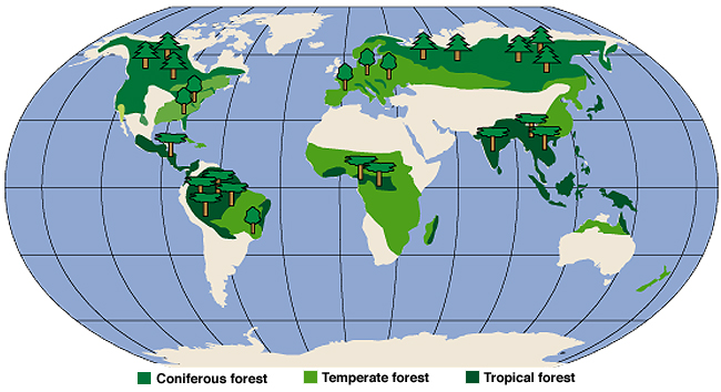 Worksheet. Learning About Our World Forests of the World