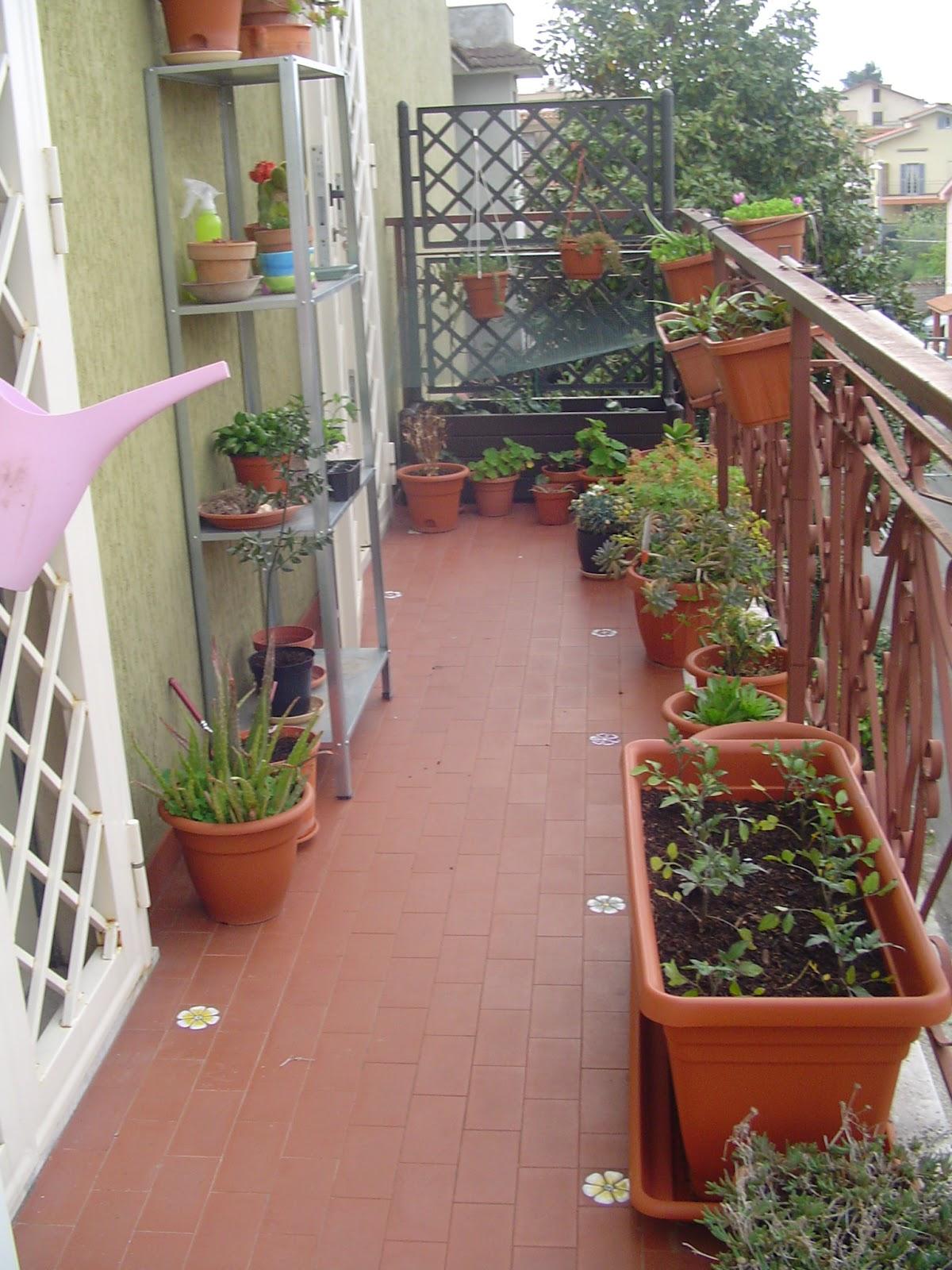 Happyippo: l'orto sul balcone di casa mia