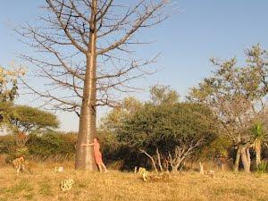 Jong Kremetart in winterkaalte op Tsumeb se gholfbaan