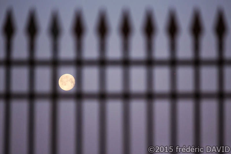 Lune grille château Fontainebleau