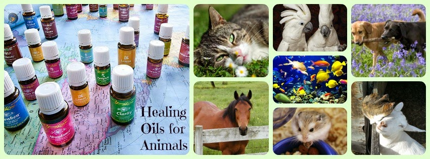 Healing Oils For Animals