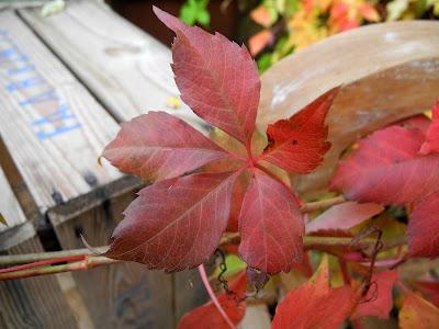 herfst bladeren met warme kleuren