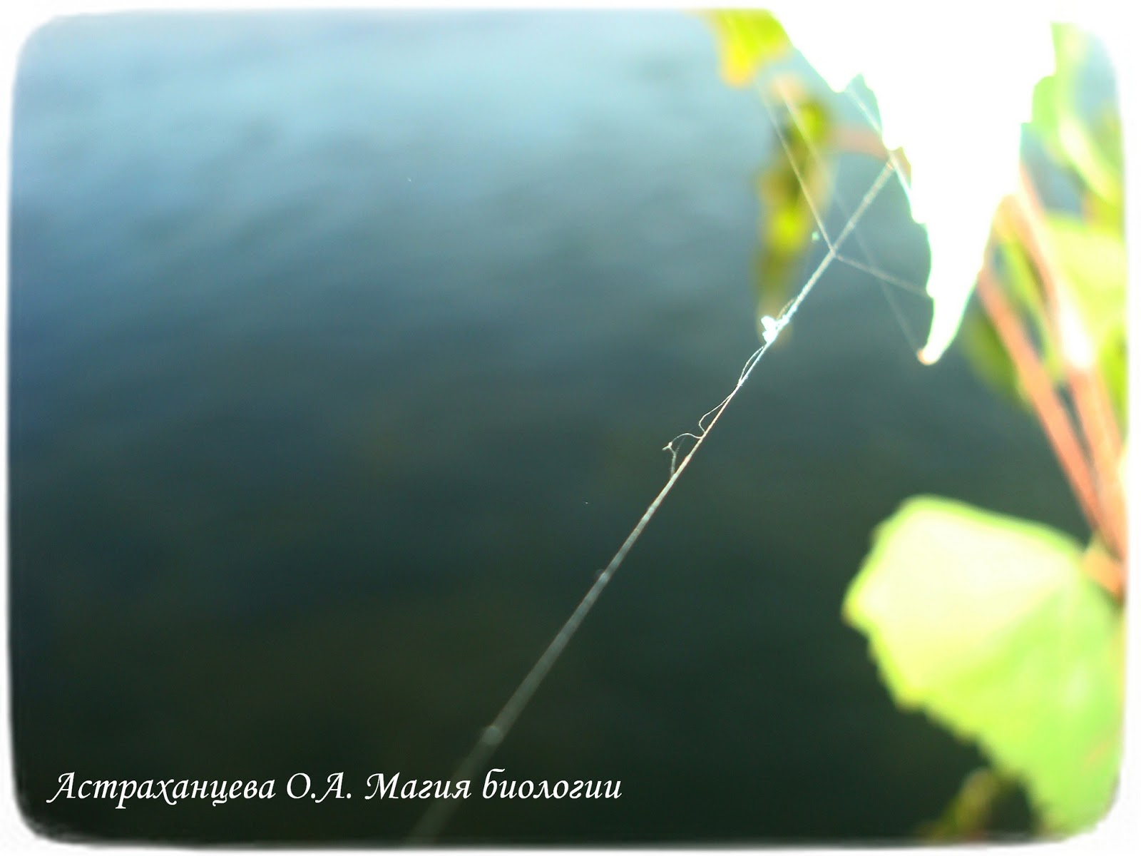 Картинки паутины в природе
