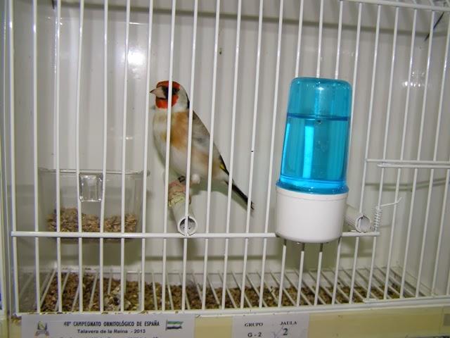 Uma de muitas aves expostas neste evento.