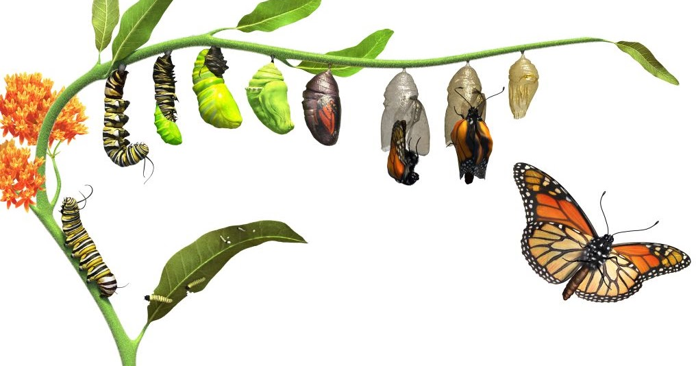 Art  Yoga Fusion  From Caterpillar To Butterfly
