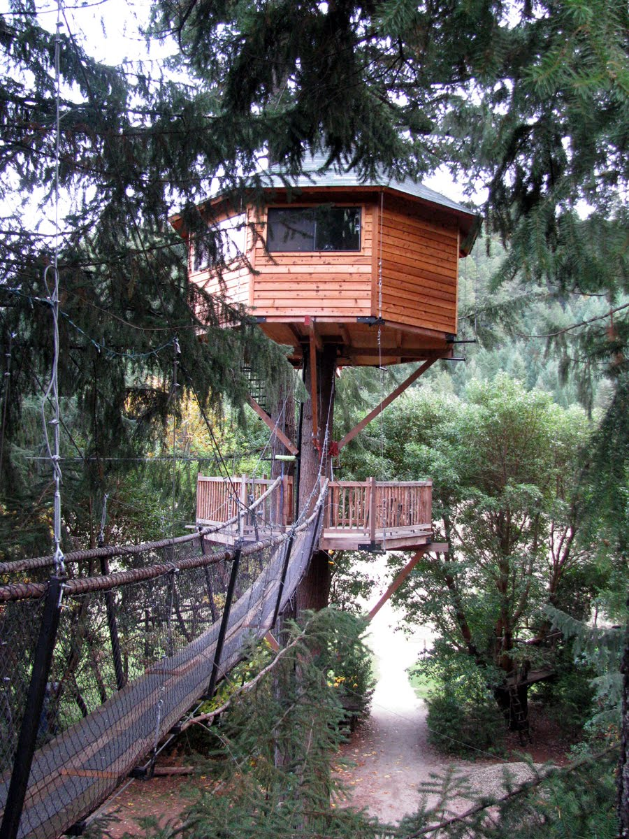 Amazing tree house wallpapers for Amazing home pictures