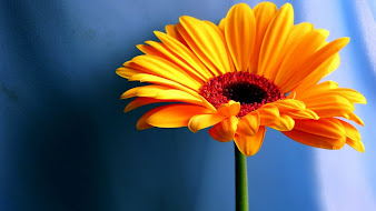 #6 Spectacular Flowers Images for Desktop