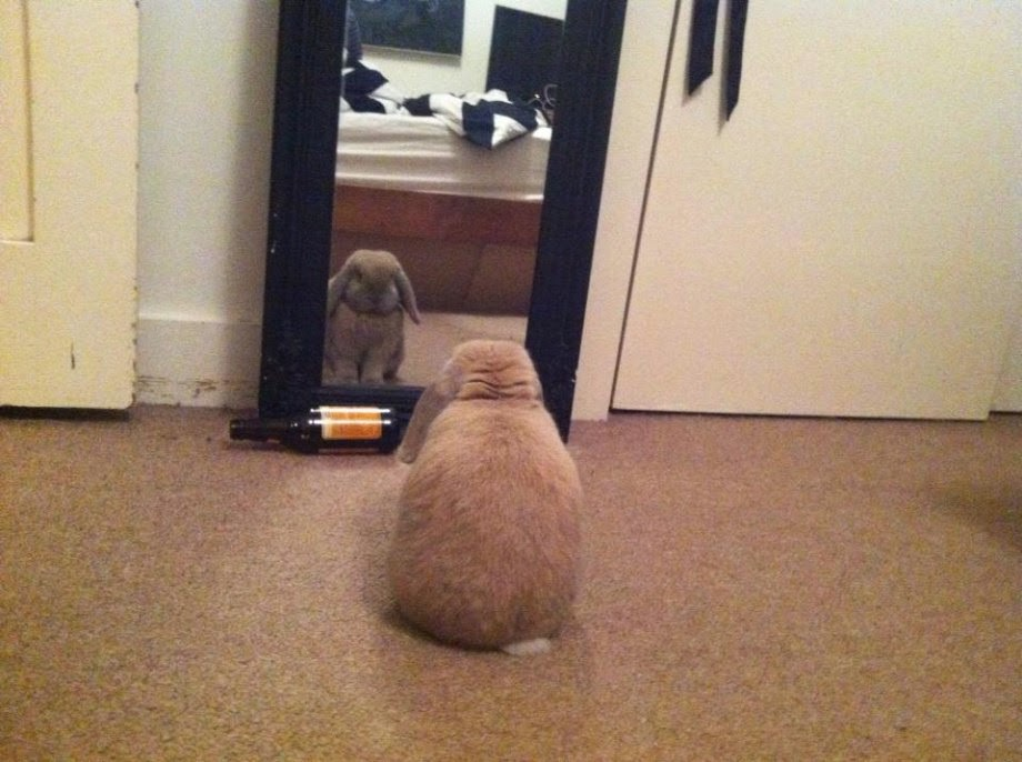 Funny animals of the week - 5 April 2014 (40 pics), fluffy bunny looking at the mirror