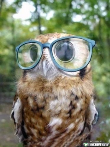 Image of: Barn Owl Arent These The Cutest Little Baby Owl Pics Ever Its Teen Stuff Its Teen Stuff Cute Baby Owl Pics d