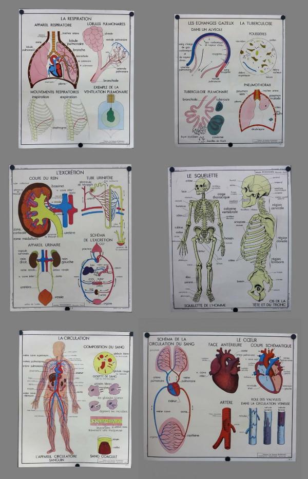 Famoso Cartel De La Anatomía Del Perro Modelo - Anatomía de Las ...