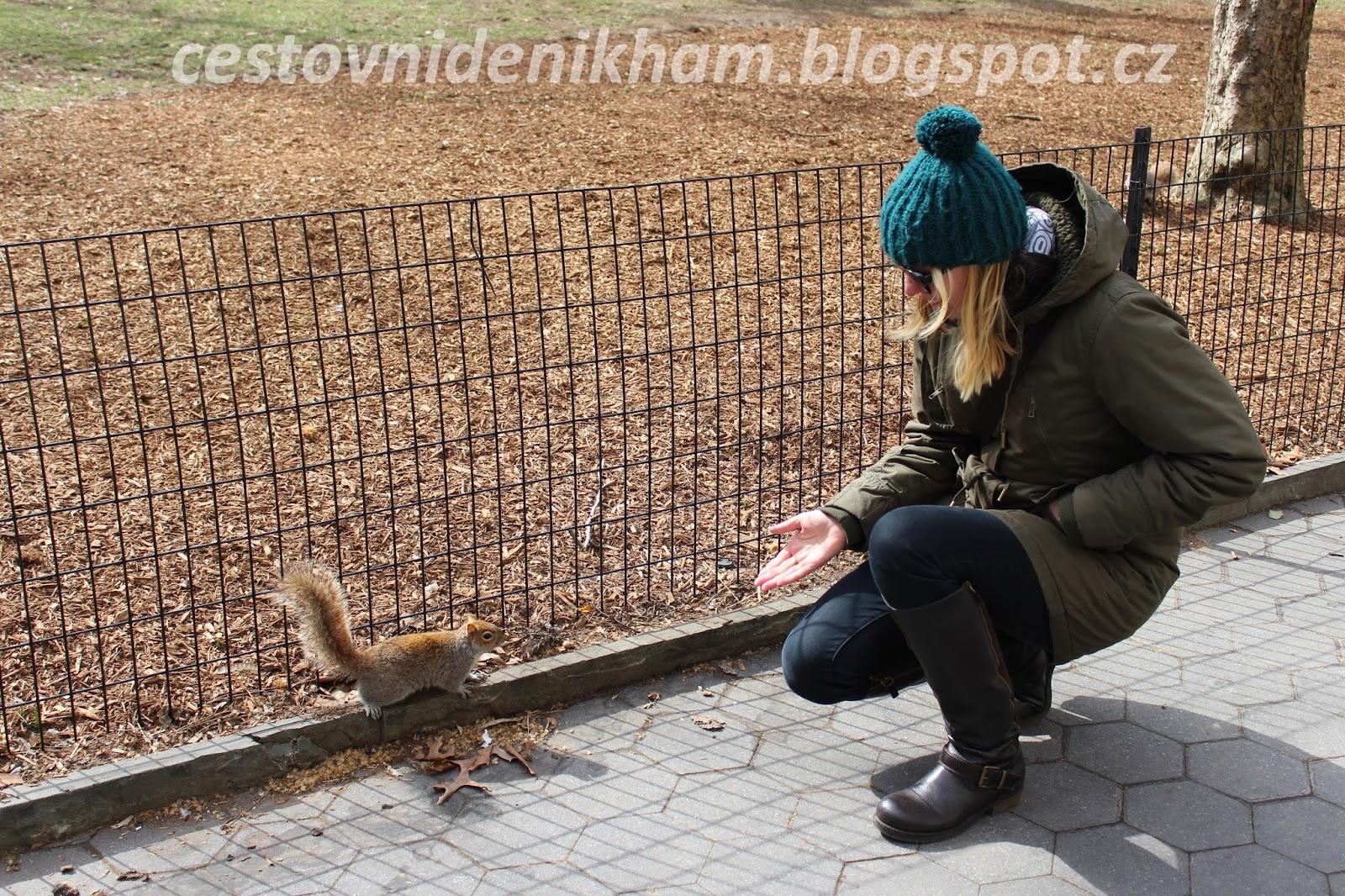 veverka // squirrel
