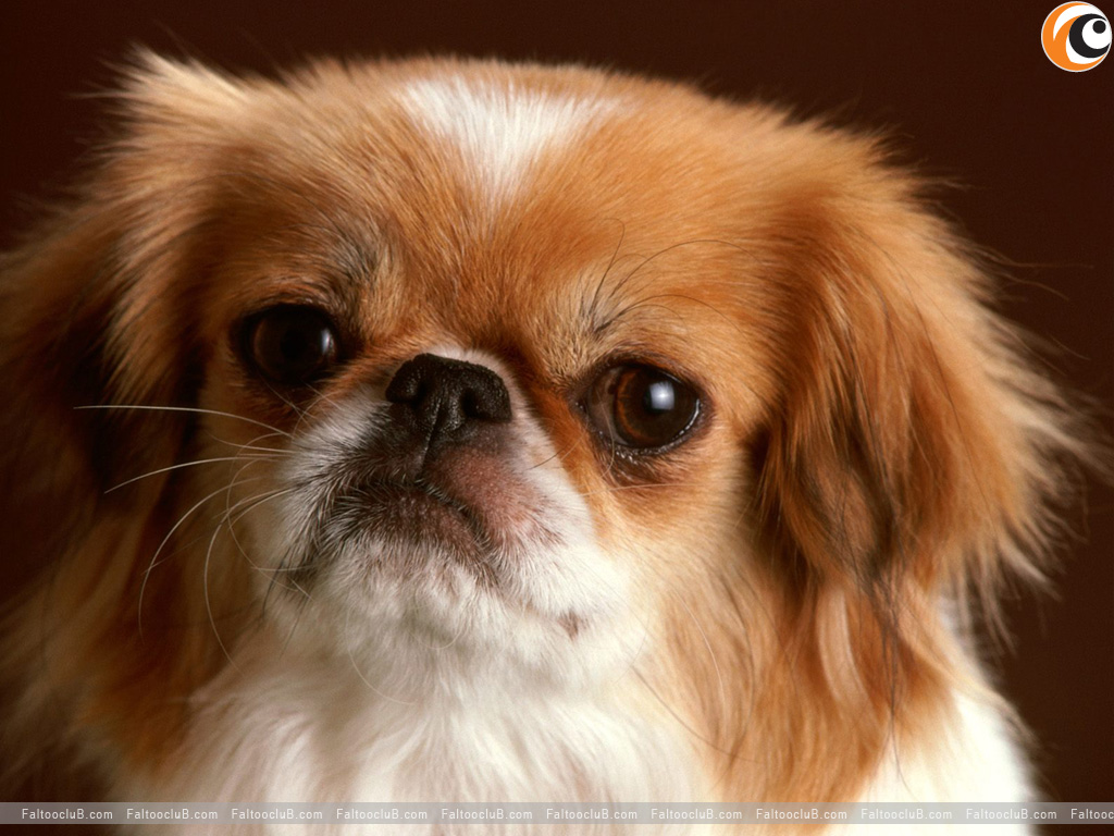 ... Pet Wallpaper, Lovely Pets Pictures & Animal Wallpapers: Pets Pictures