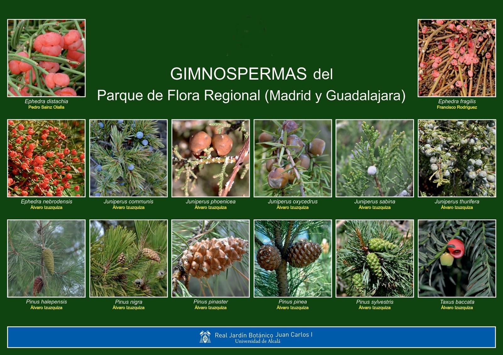 Maestro san blas clasificaci n de las plantas for Clasificacion de las plantas ornamentales
