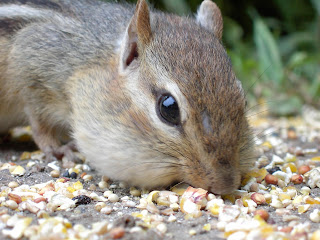 Chipmunks picture
