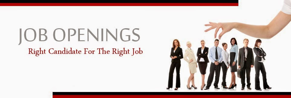 SEO Jobs in Noida