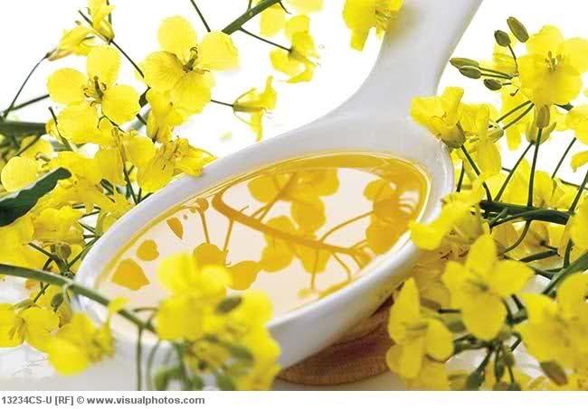 Best Natural Oils