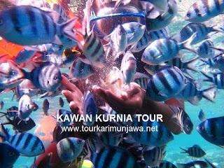 wisata tahun baru karimun jawa tour