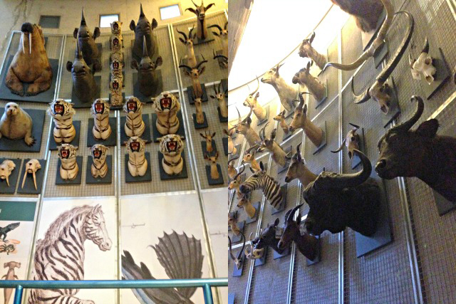 Tiere im Museum National de Ciencias Naturales Naturkundemuseum