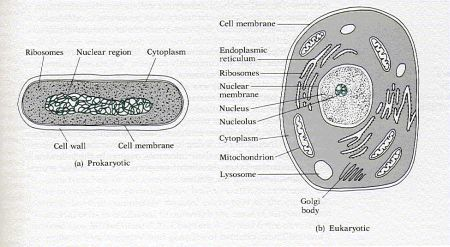 understanding viruses bacteria and prions essay Molecular expressions cell biology - understanding viruses, bacteria, and prions.