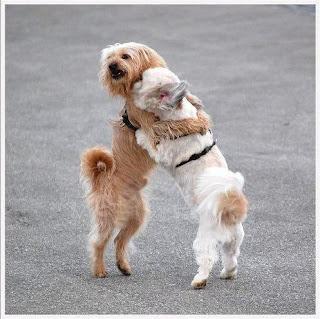 amor entre perritos fotografias de animales tiernas