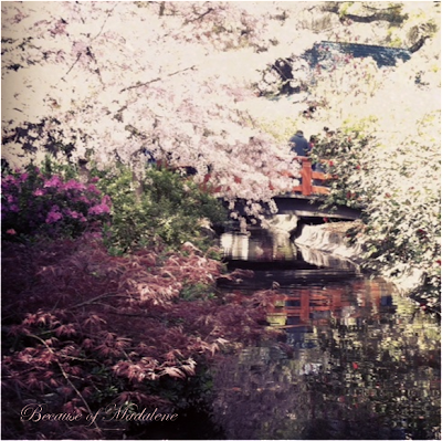 Because Of Madalene Cherry Blossom Festival