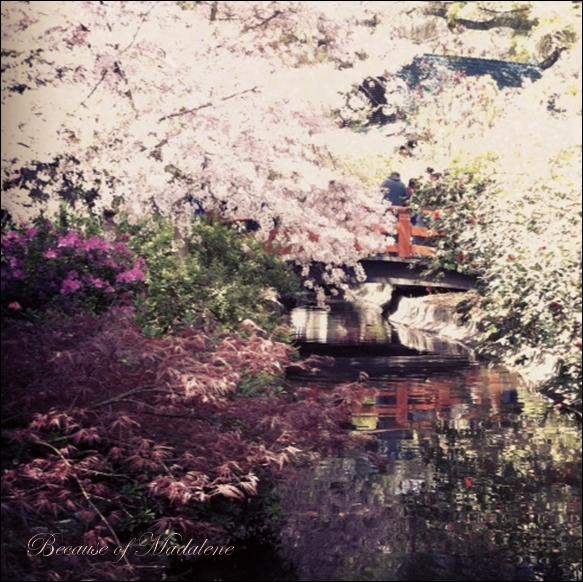 Because of madalene cherry blossom festival Cherry blossom festival descanso gardens