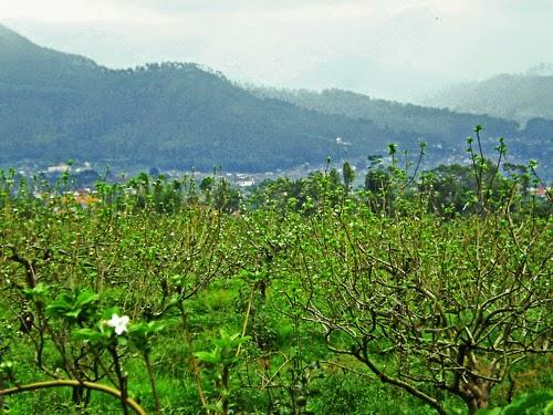 Agro Wisata - Batu Malang, East Java