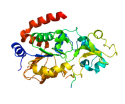 computer generated image of the SIRT3 protein