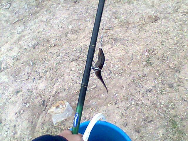 Pescando con el bicho pesca del dorado en el r o paran - Cual es el mejor cebo para ratones ...