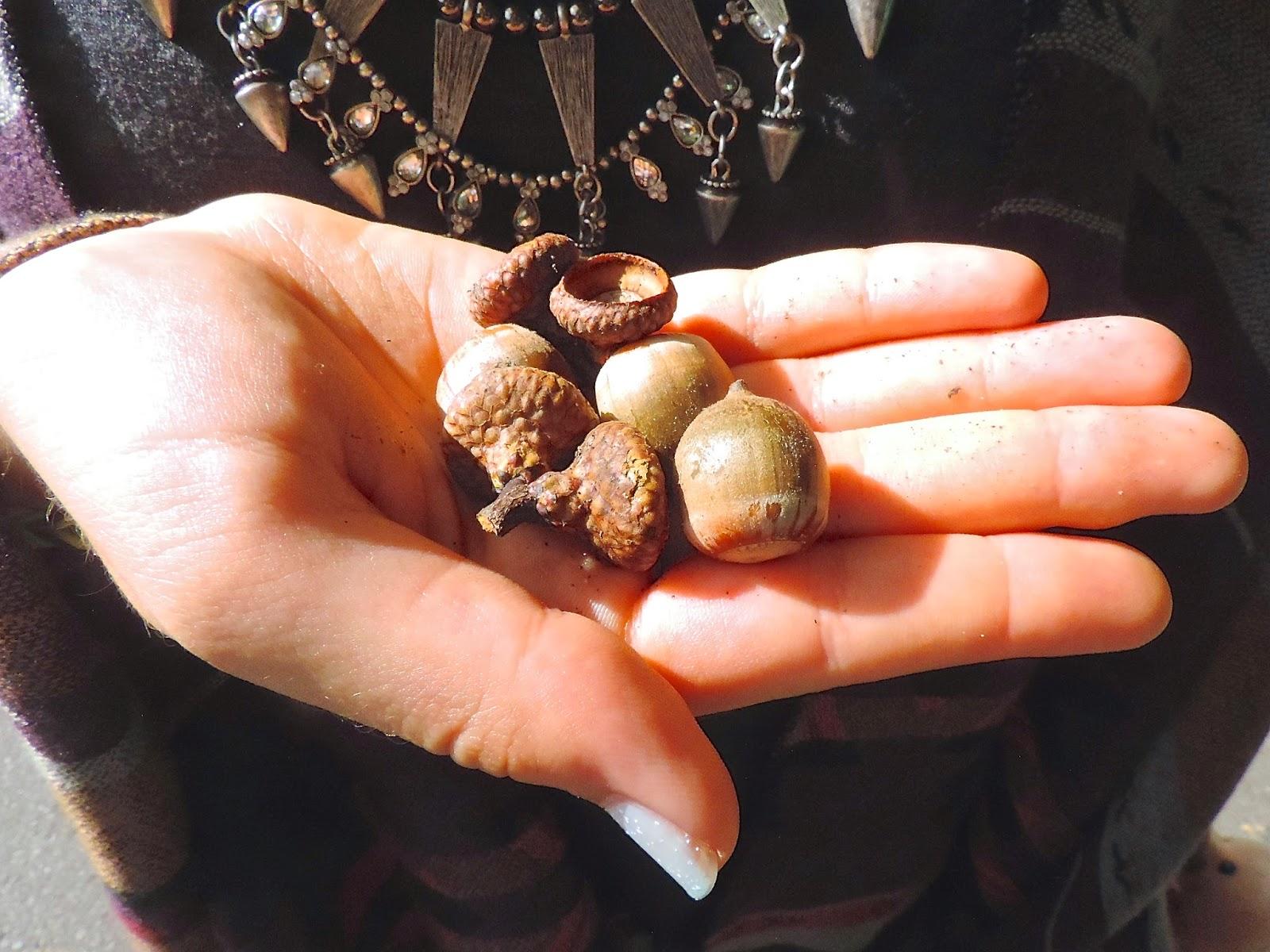 Nuts macro shot