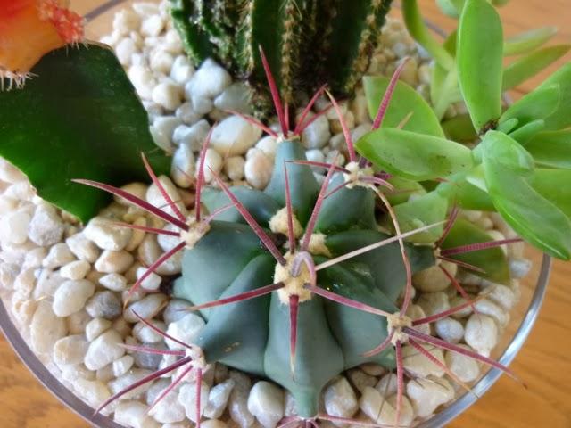 Indoor Cactus Garden Ohio is my reset button indoor cactus garden indoor cactus garden workwithnaturefo
