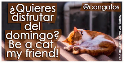 con gatos gatera rumbo be a cat my friend
