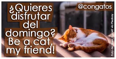 con gatos gatera rumbo be a cat my friend