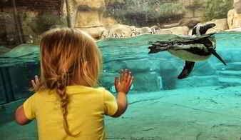 Niña mirando animales en el zoo