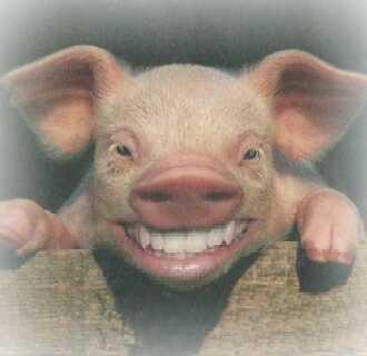 """Résultat de recherche d'images pour """"cochon"""""""