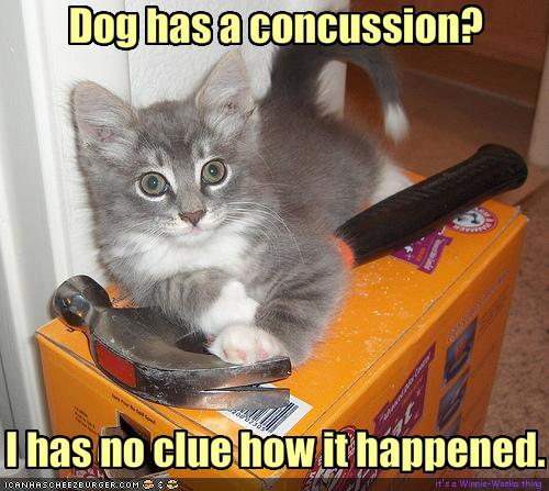 funny images of animals with captions. Funny animal Pictures