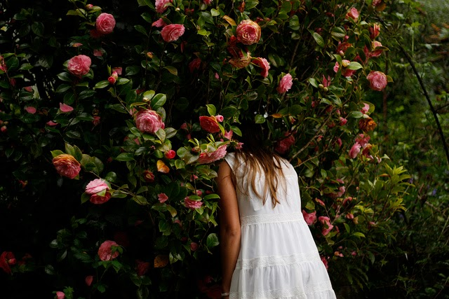camelia, flower, girl, story, love