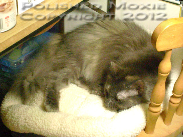 Photo closeup of my cat Gracie sleeping in a chair.