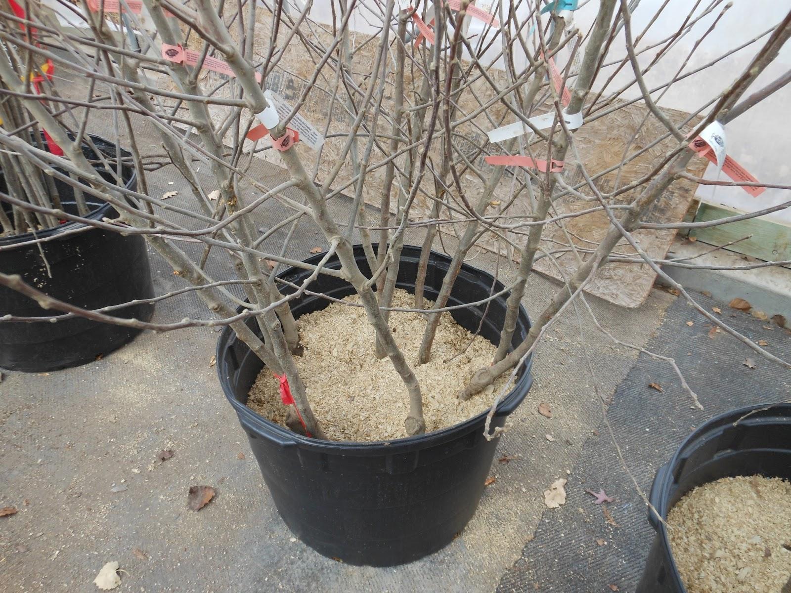 viveros de arboles frutales trees that please nursery tenemos rboles frutales bare