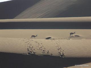 Reisen Afrika Namibia Wüste Namib