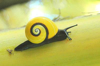 caracol cubano más bello del mundo
