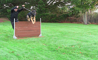 Dog jumping a wooden jump