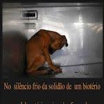 Os animais sentem dor e solidão