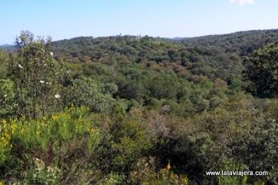 Vegetacion Parque Natural Sierra Hornachuelos