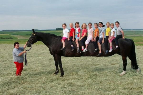 Funny Long Horse