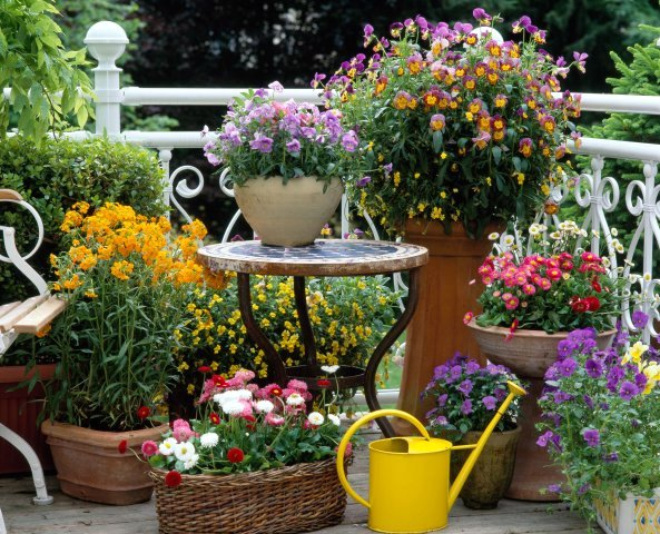 Home quotes spring inspiration patio garden designs for for Small colourful garden ideas