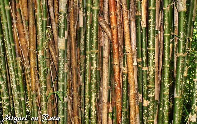 Bamboo-Erawan-Thailand