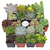 Shop Succulents Unique Succulent 20-Plant Set $31.99 (Retail $39.99)